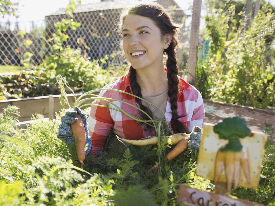 Mujer joven cosechando zanahorias