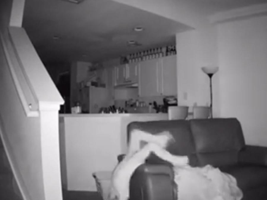Se llevaron una sorpresa al ver lo que hacía tanto ruido en su cada de noche