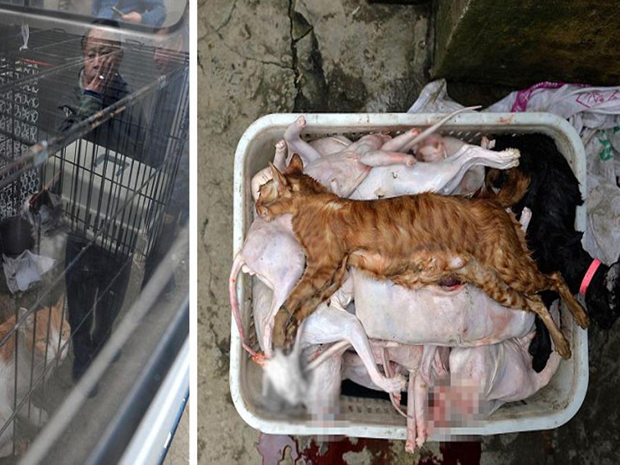 Aseguraba rescatar gatos callejeros, pero los mataba para venderlos como conejos (VIDEO)