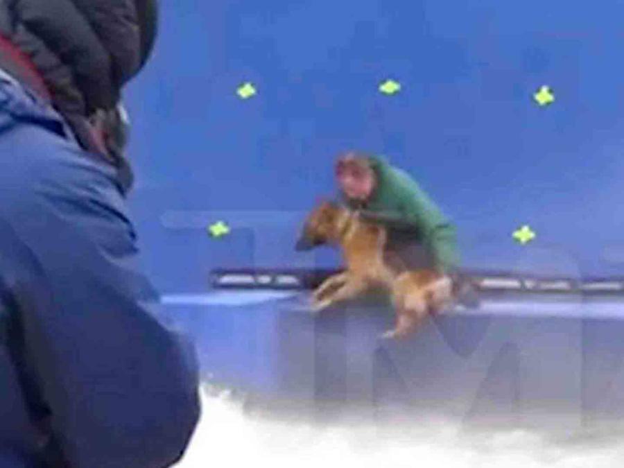 A dog's purpose, hercules