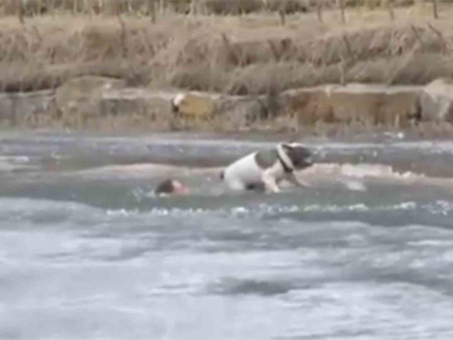 Hombre salvando a perro