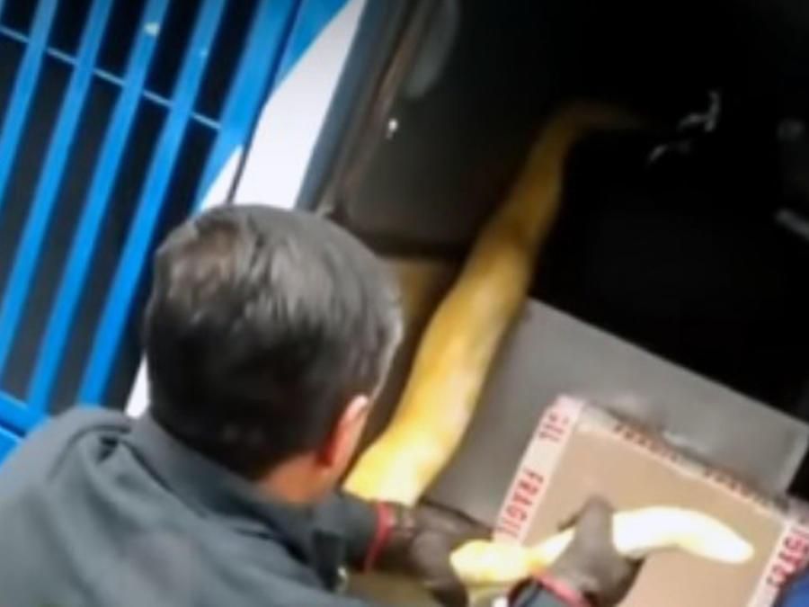 Encuentran serpiente en bus