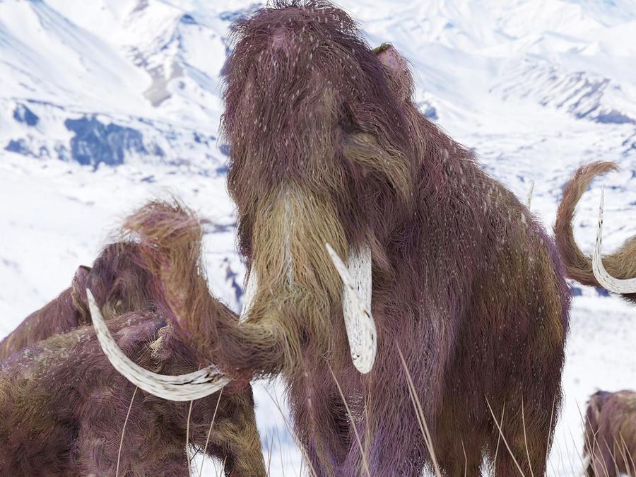 Familia de mamuts lanudos en el hielo