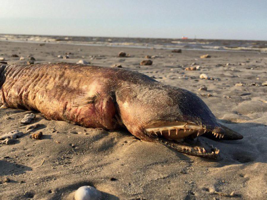 Aparece criatura en Texas y nadie sabe qué es (Fotos)