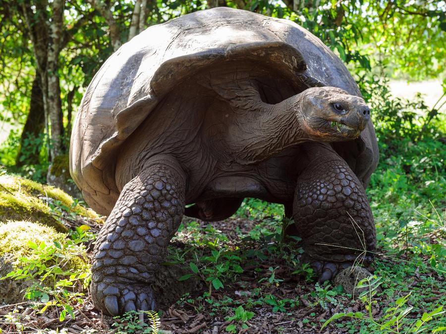 Tortuga de las Galápagos