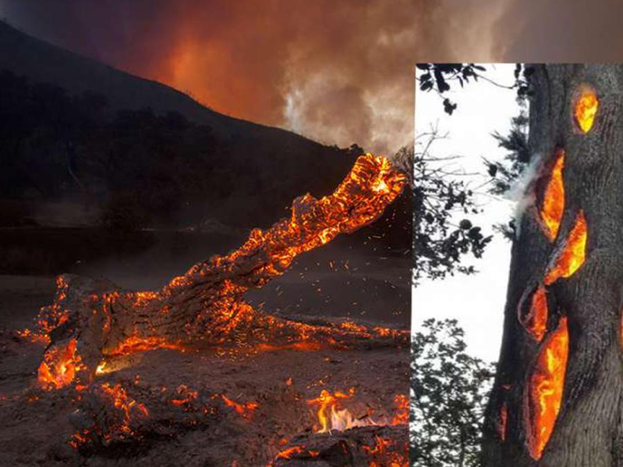 Aseguran que el video de un árbol quemándose por dentro asemeja un portal del infierno