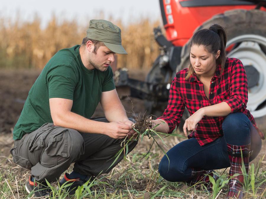 Agricultores jóvenes
