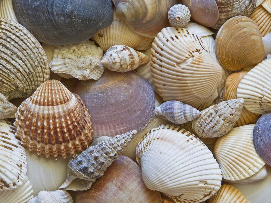 Muchos caracoles