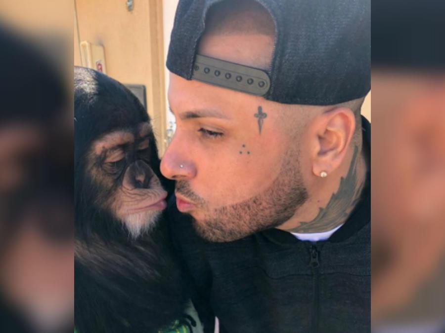 Nicky Jam besa a chimpancé