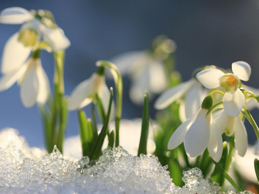 Flores en la nieve