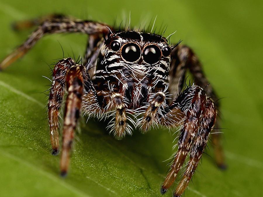 Encuentran hogar infestado de arañas