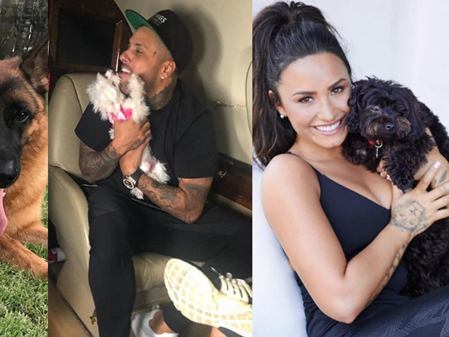 Enrique Iglesias, Nicky Jam, Demi Lovato y sus mascotas