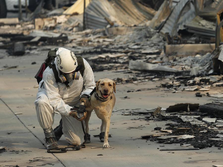 Un rescatista atiende a su perro mientras buscan personas tras el incendio Camp Fire en California