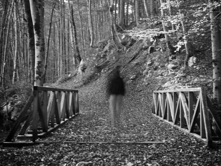 Fantasma en el bosque