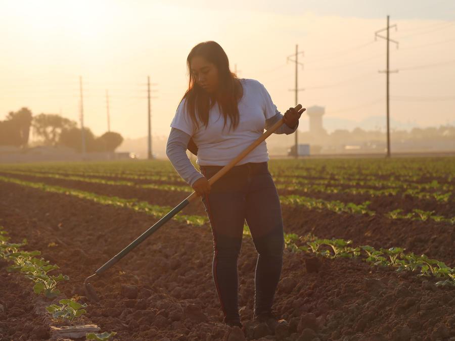 Jimena Aguilar, de 17 años, haciendo trabajo agrícola en Arizona una mañana a mediados de septiembre de 2020.