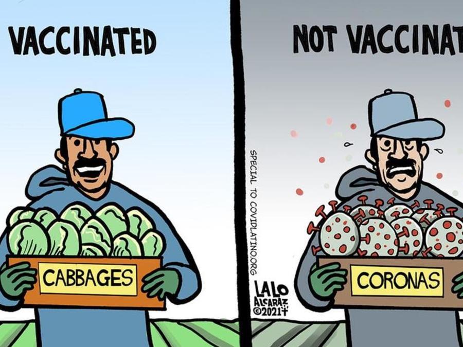 Una de las viñetas de Lalo Alcaraz para CovidLatino.org compara a un trabajador agrícola latino vacunado con otro no vacunado.