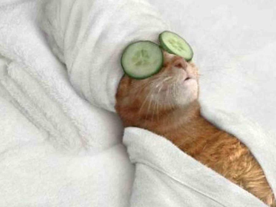 Gato en el spa