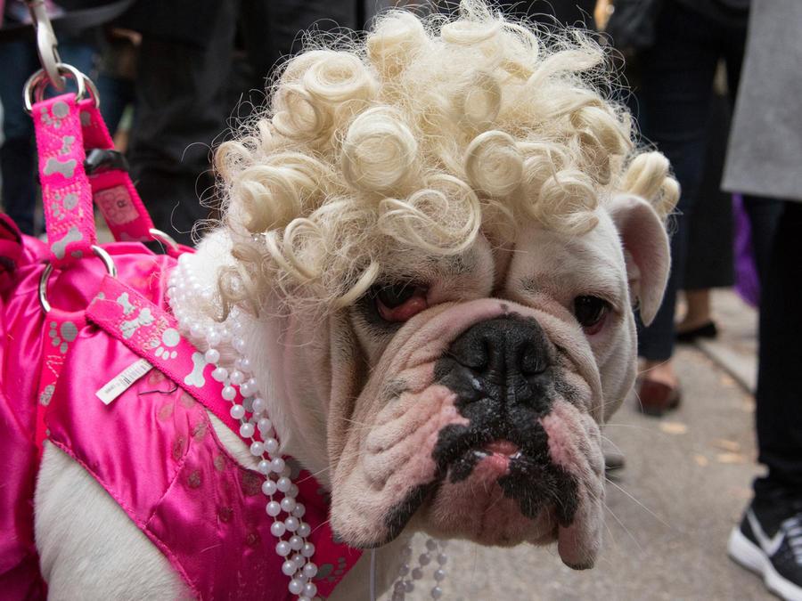 perros disfrazados new york
