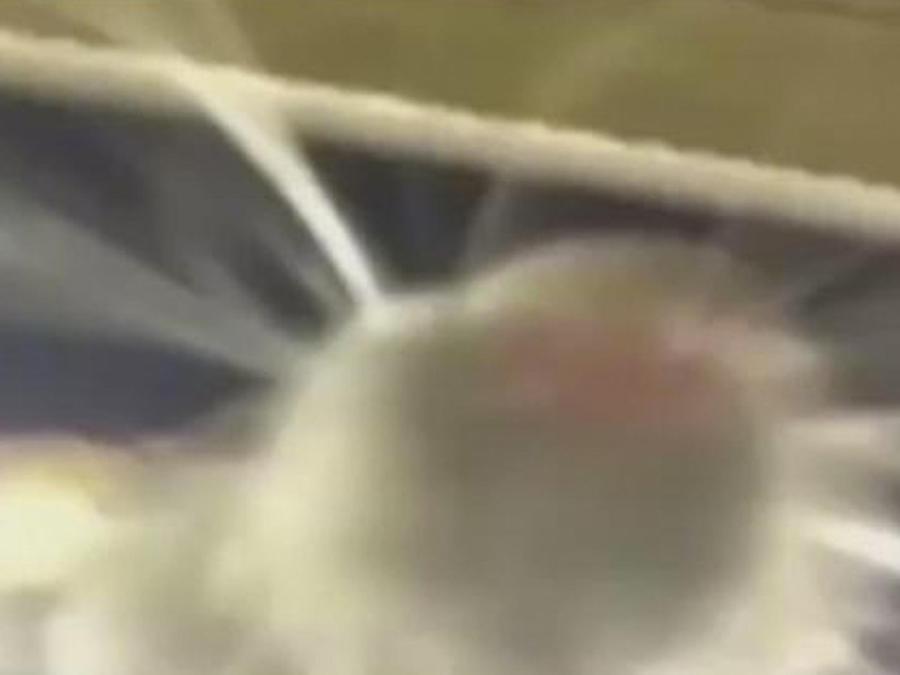 rata-selfie