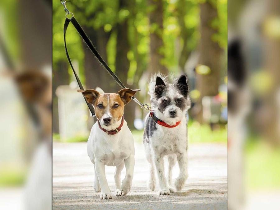 sociedad protectora de animales de kansas ofrece adopciones gratuitas