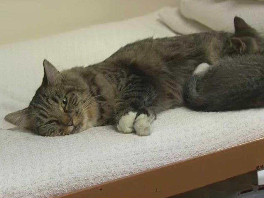 Presos en un condado de Washington reciben terapia con gatitos callejeros