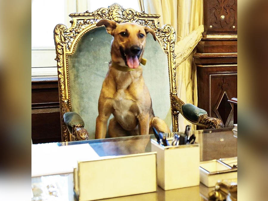 balca perro de mauricio macri