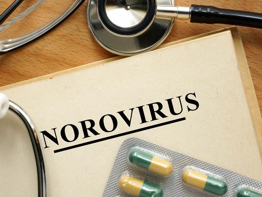 epidemia norovirus