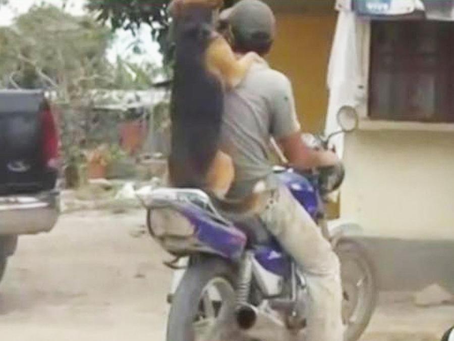 perro en moto