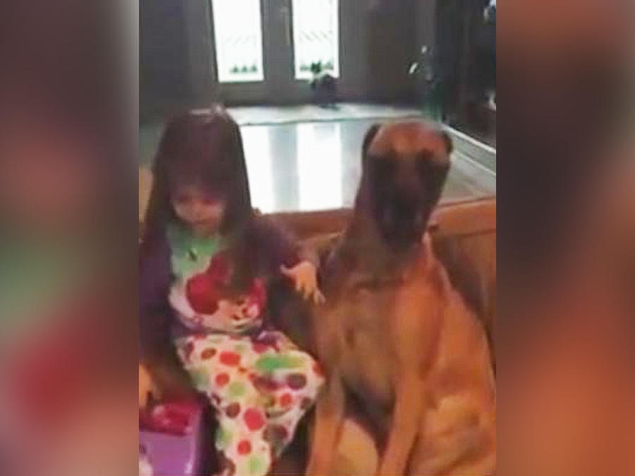 niña juega a ser veterinaria con su perra