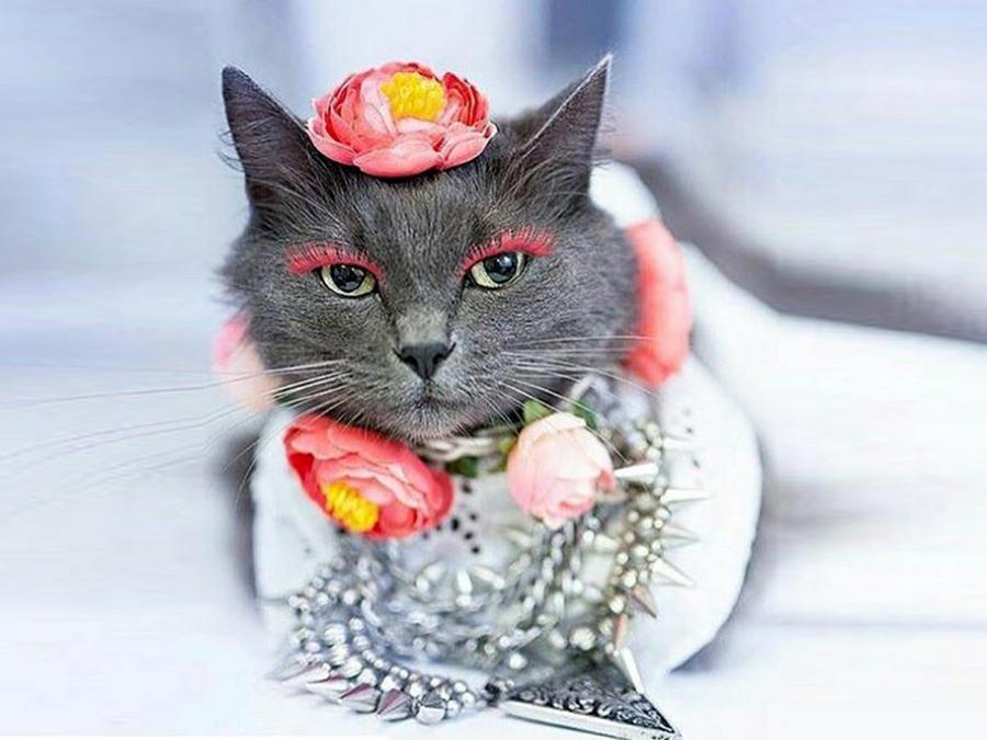 """Esta es la gata más """"fashion"""" del momento"""