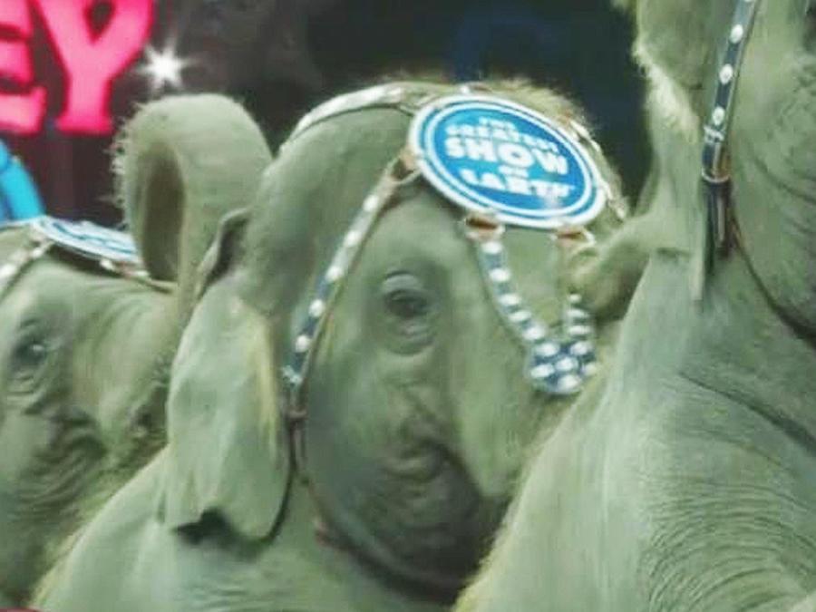 elefantes acto circense