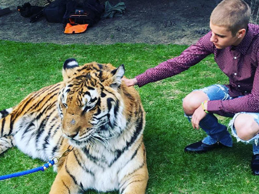 justin bieber con tigre amarrado