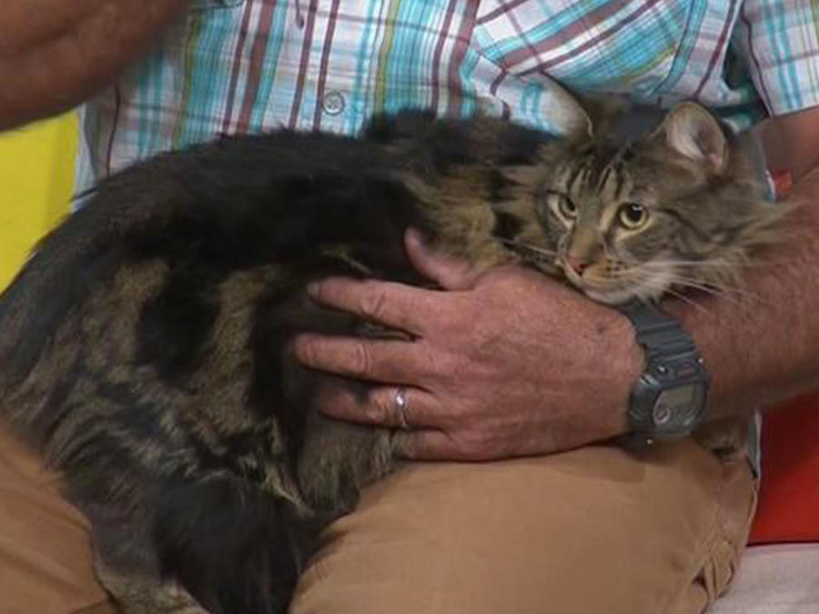 ¿Adoptarías a un gato? ¡Te contamos las ventajas!