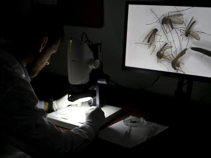 Científicos localizan anticuerpos contra el zika