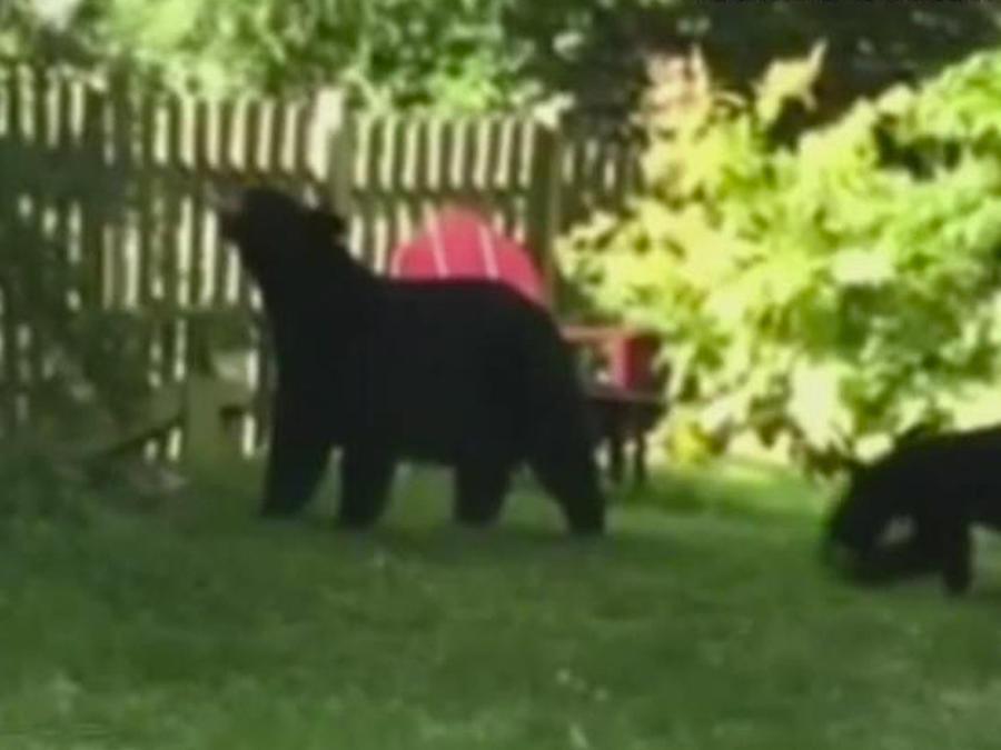 familia de osos