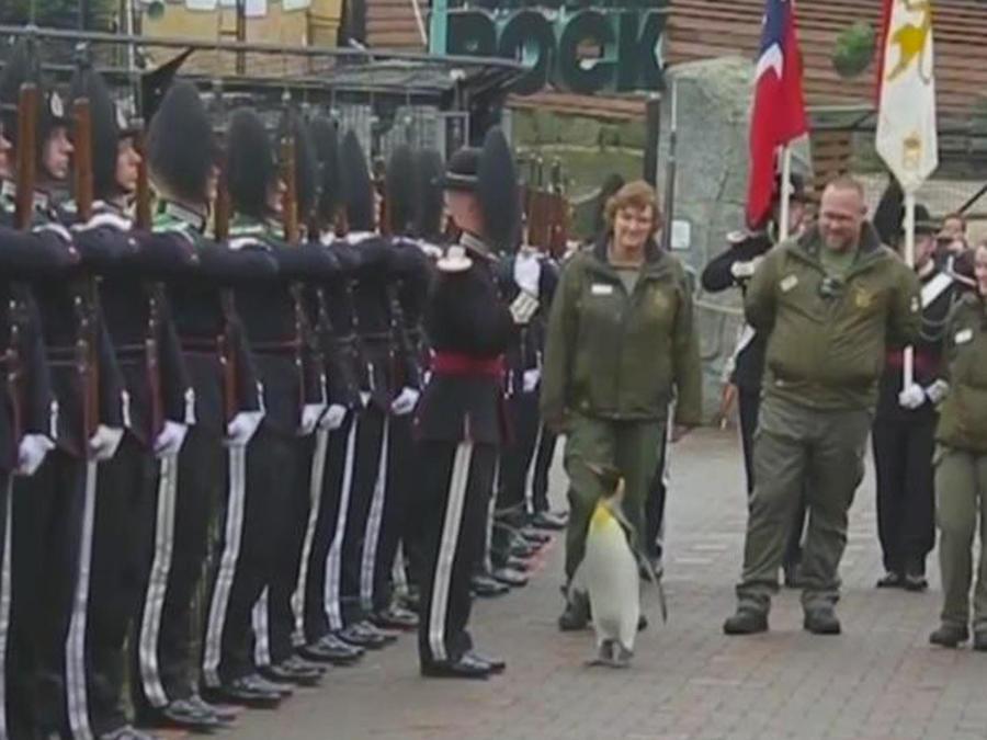 pinguino militar