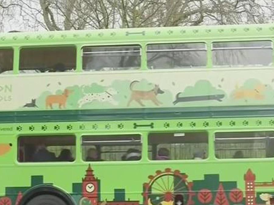 autobus turistico para perros