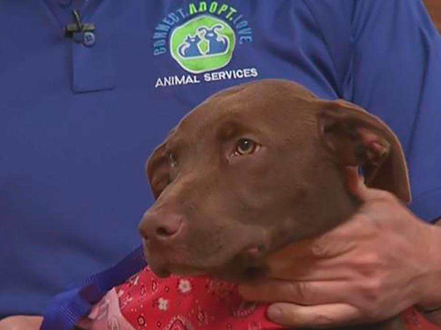 Desocupar los albergues para animales es el objetivo y puedes ayudar adoptando una mascota