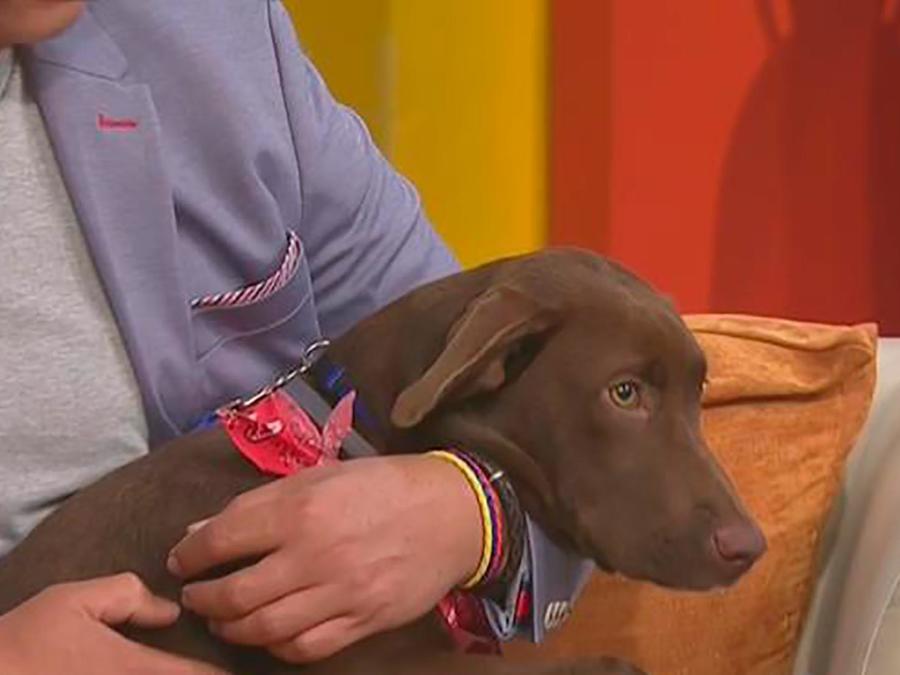 Te explicamos todo lo que debes tener en cuenta antes de adoptar una mascota