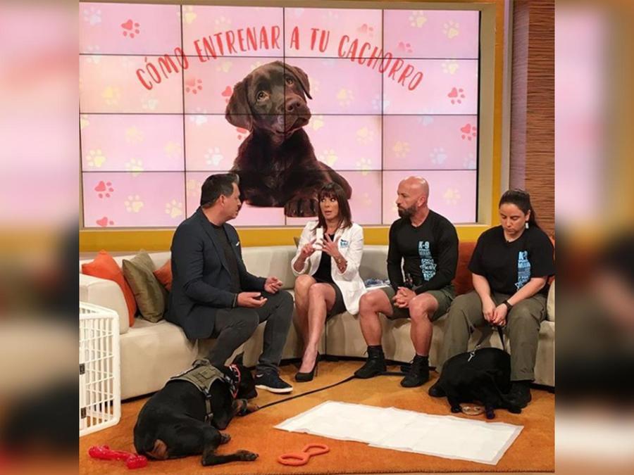 Un especialista nos enseñan cómo entrenar a tu mascota para que haga lo que tu deseas