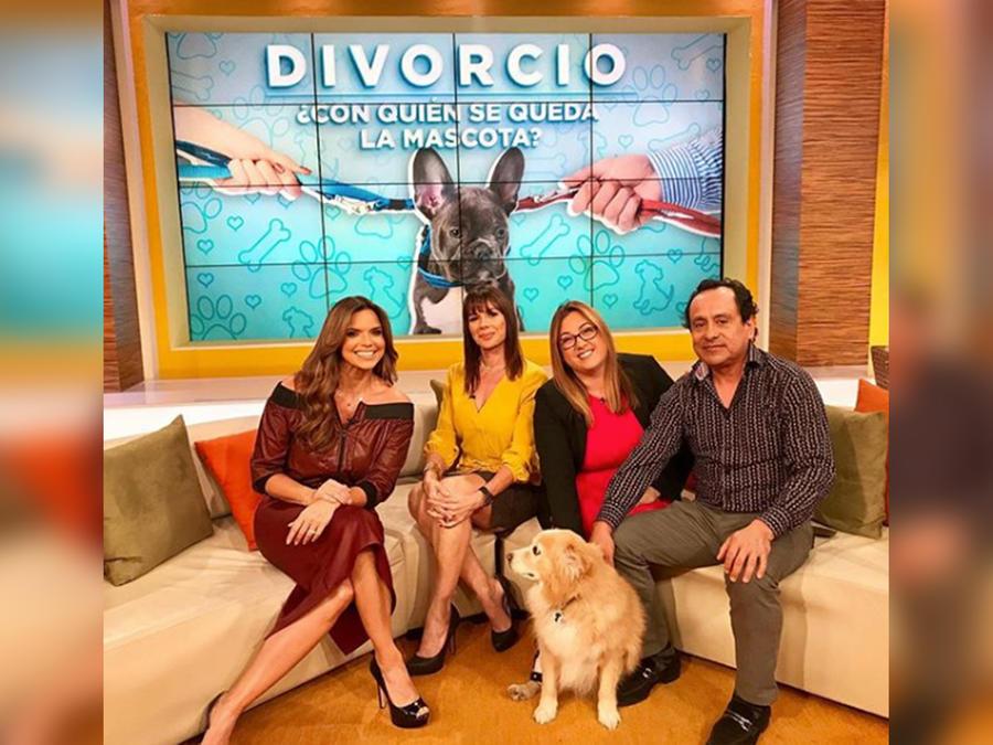 Divorcio, ¿con quién debe quedarse con la o las mascotas del hogar?
