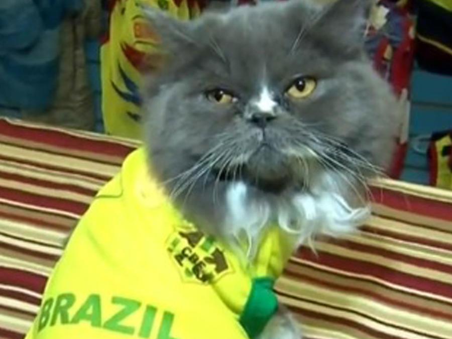 Ropa para mascotas de la Copa América