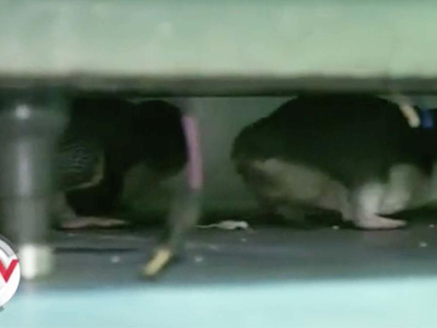 Pinguinos escondidos debajo de una estufa