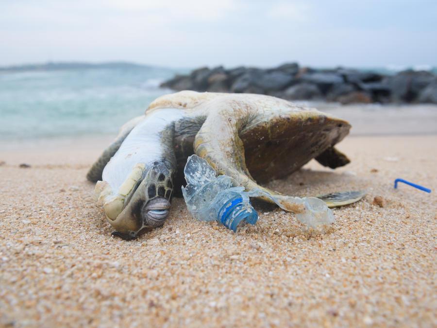 Dead sea turtle among ocean plastic waste