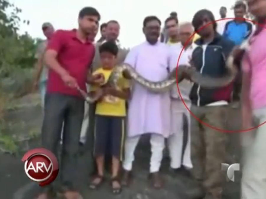 Serpiente pitón muerde a hombre que se tomaba un selfie