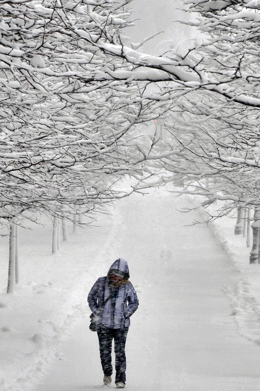 Un transeúnte camina entre filas de árboles nevados en el Boulevard Martin Luther King Jr. Blvd. en Worcester, Massachusetts. durante yuna tormenta invernal el viernes, 5 de febrero del 2016.