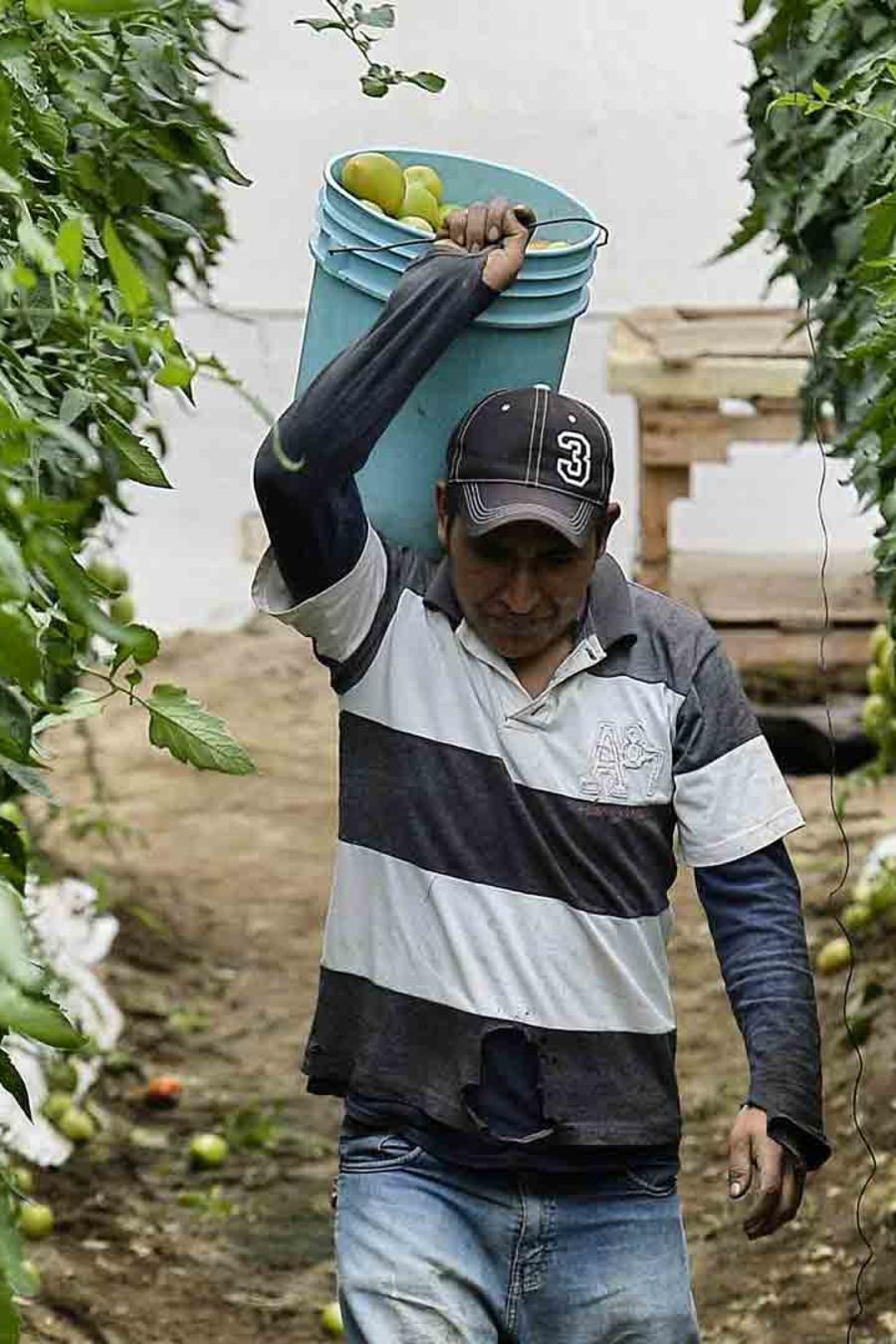 Trabajador agrícola en California