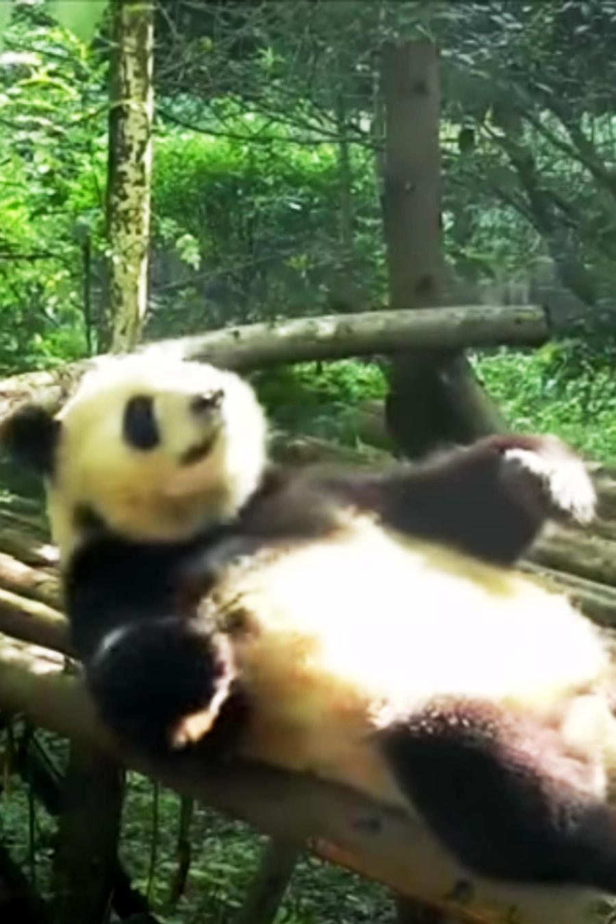 Panda y abdominales