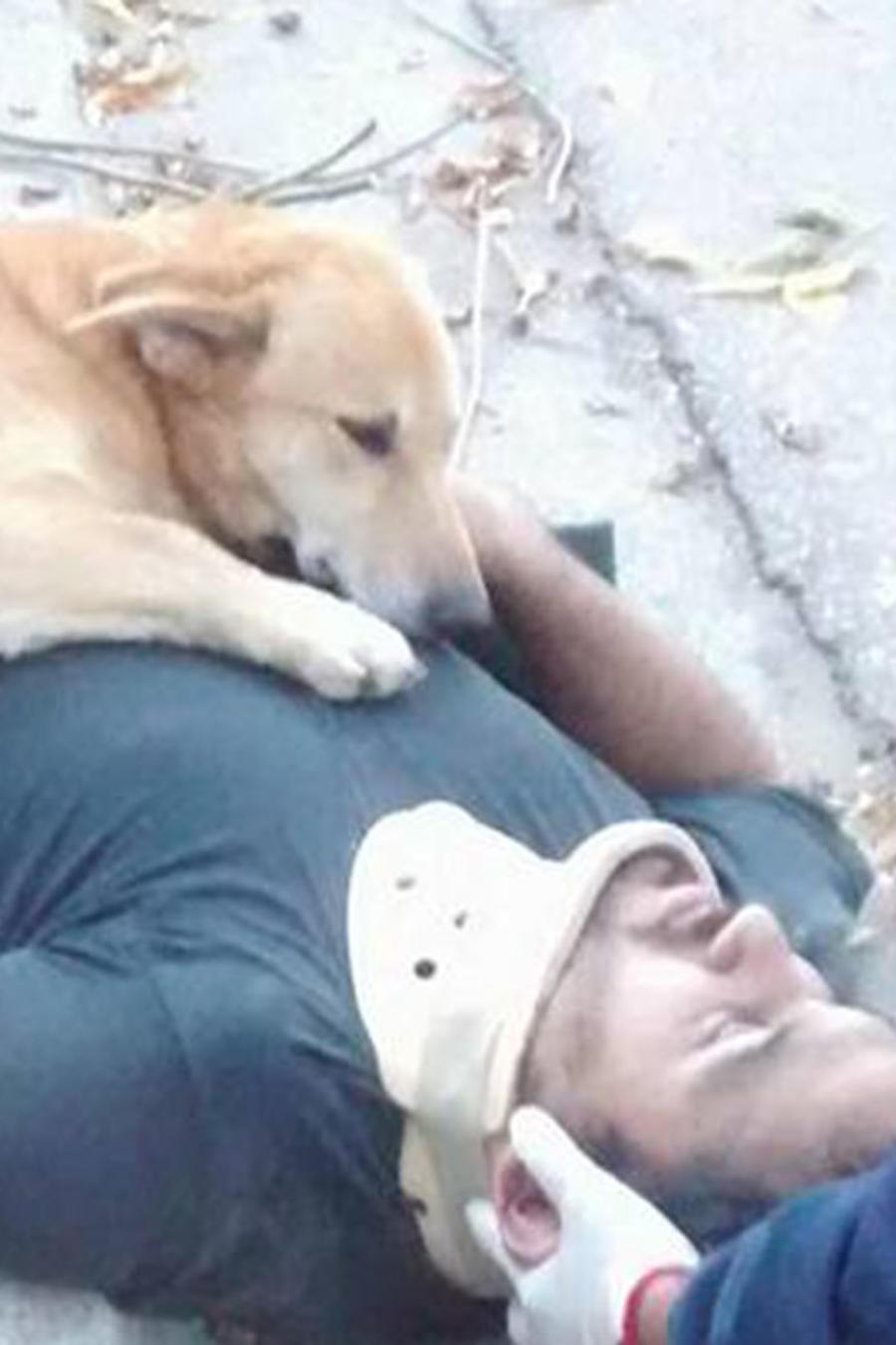 """Tony"""", el perro que abraza a su dueño herido"""