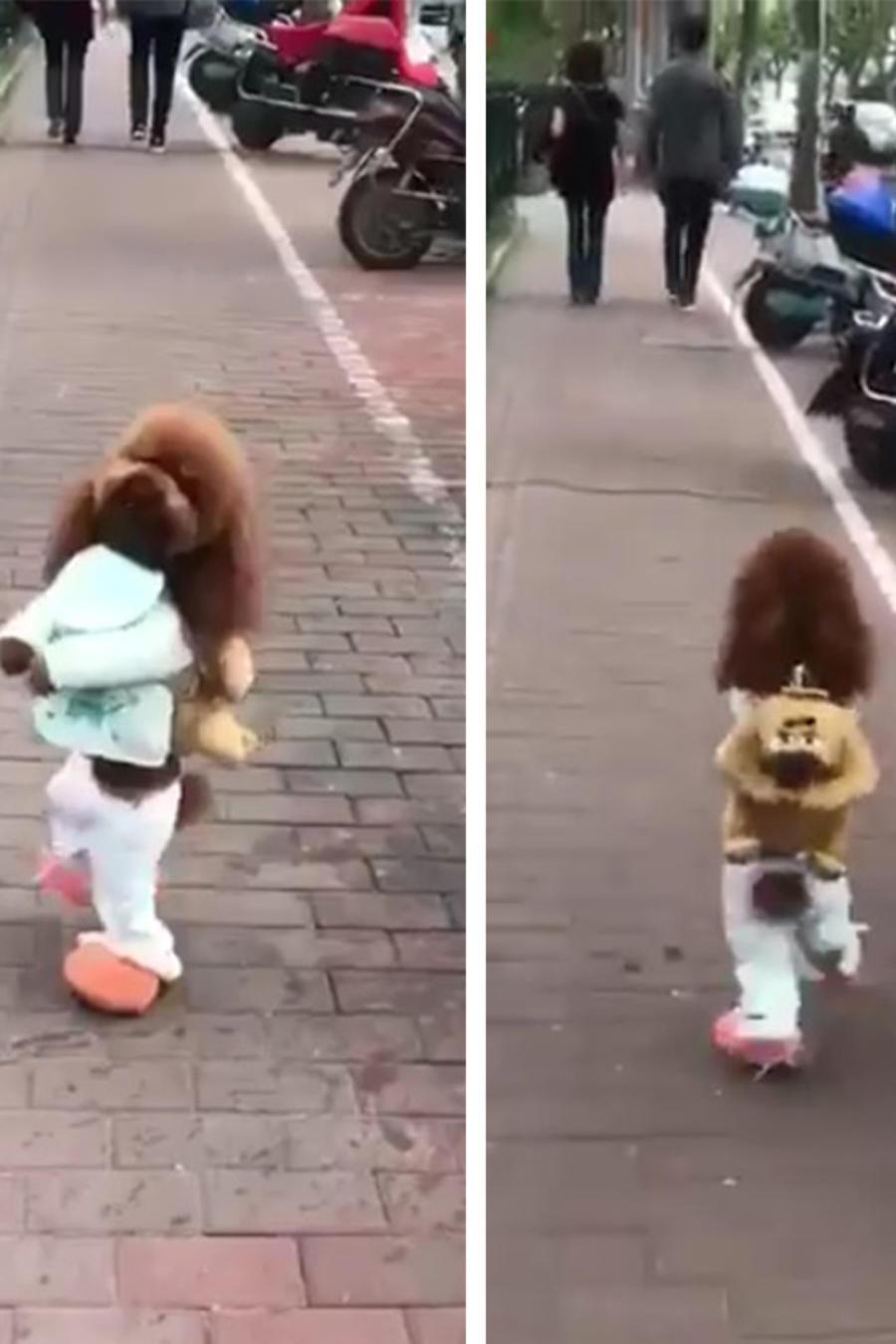 Los perritos que caminan erguidos